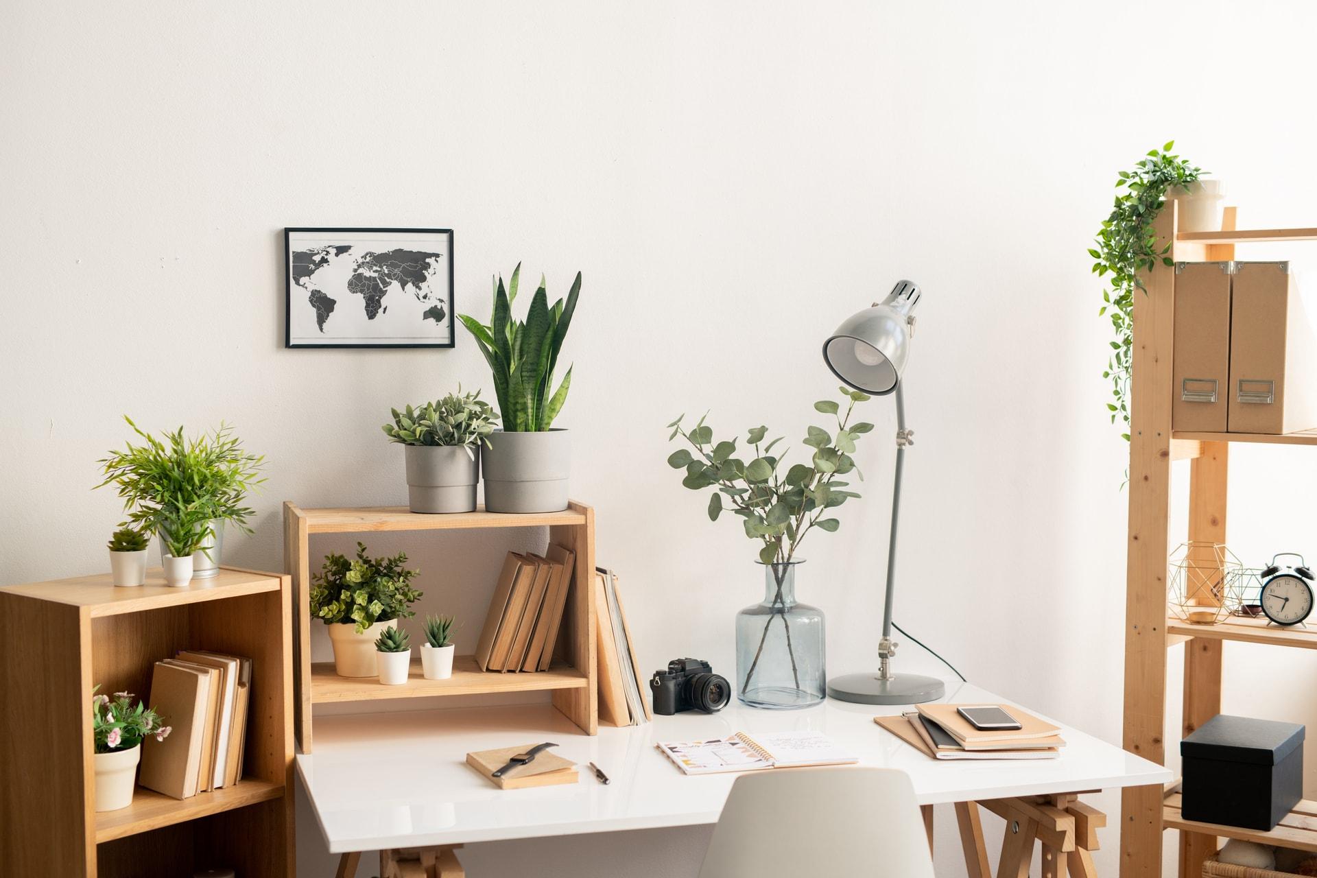 Low-Maintenance Office Plants